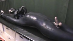 Fullrubber And Fully Stretched Out (grb749)